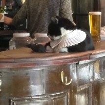 Peabody the Cat in the ancient Seven Stars pub in Lincoln's Inn Fields